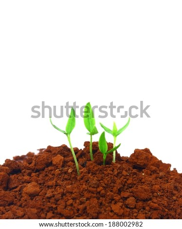 how to grow a sapling
