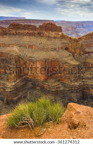 Growing shrubs on the rocks of the Grand Canyon
