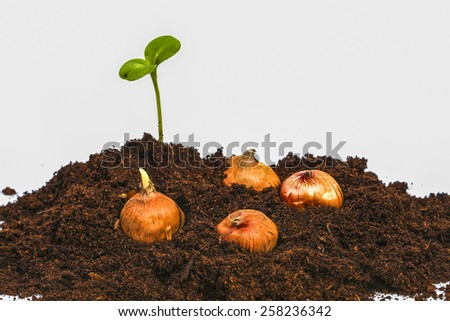 Growing sprout with flowerbulbs in earth - stock photo