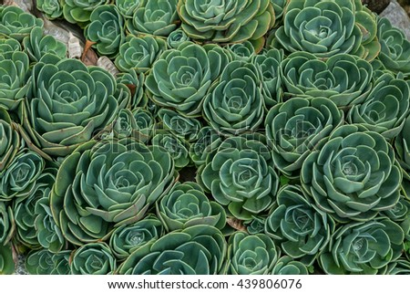 growing succulents - stock photo