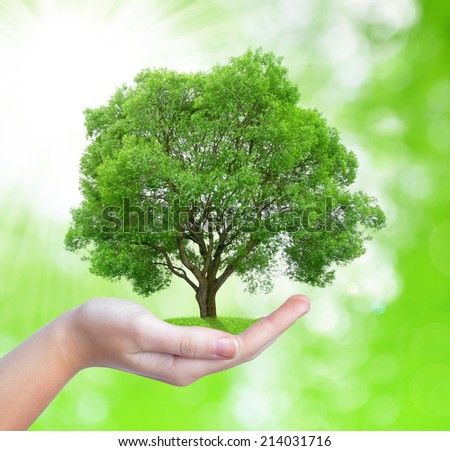 Growing tree in hand on green natural background - stock photo