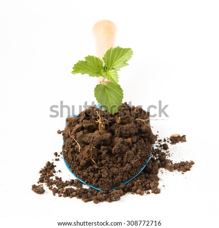 Growing young plant with garden shovel on white background