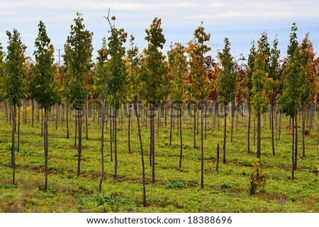 growing young trees - stock photo