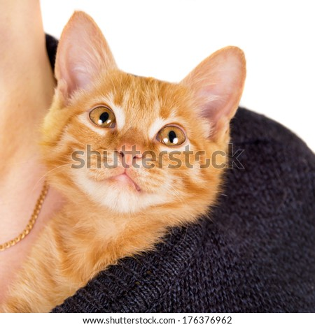 grown man holding a red-haired kitten isolated on white background