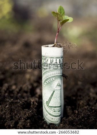 Growth concept, growing dollar bills in soil. - stock photo