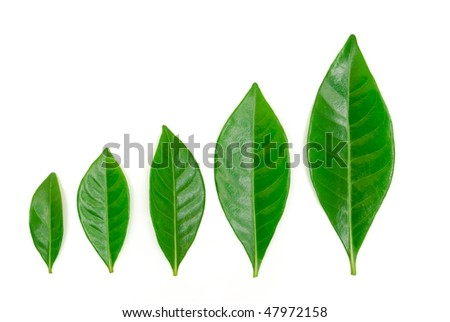 Growth concept growing leaves - stock photo