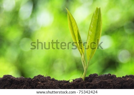 growth concept witch young plant and green bokeh copyspace - stock photo