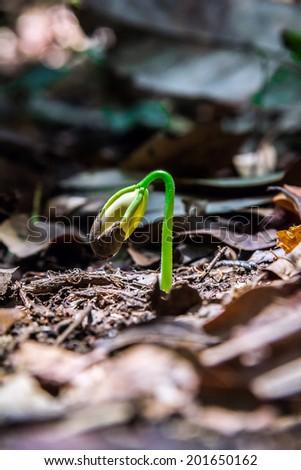 growth, green, seedling, tree, new life - stock photo