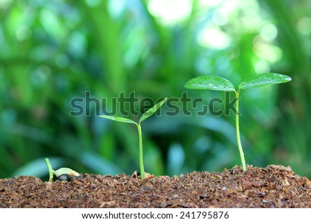 Growth of new life with water drops - stock photo