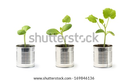 Growth of pumpkin's sprout - stock photo