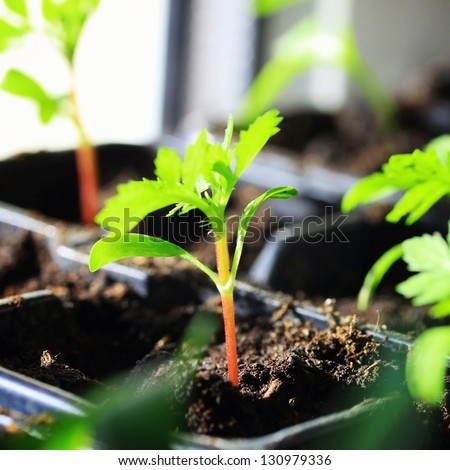 Growth of sprout seed in soil