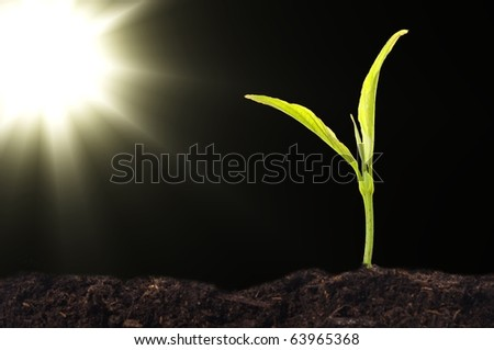 growth or new life concept with small plant sun and copyspace - stock photo