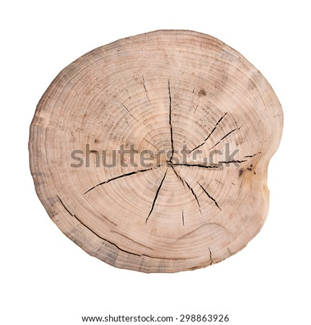 Growth rings. Isolated white background
