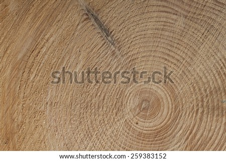growth rings of a tre, spruce tree, detailed view - stock photo