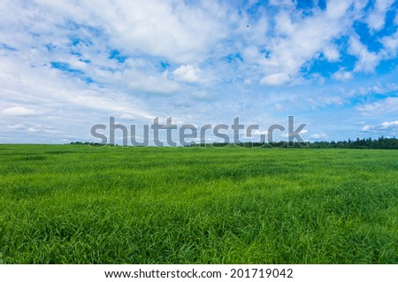 Growth Season Grass Lawn  - stock photo