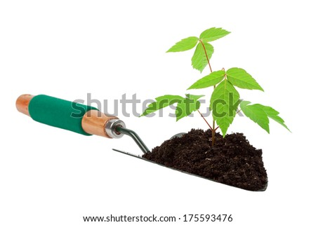 growth tree in gardening tool shovel land - stock photo