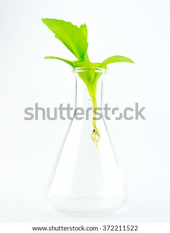 Growth up plant in glass tube  - stock photo