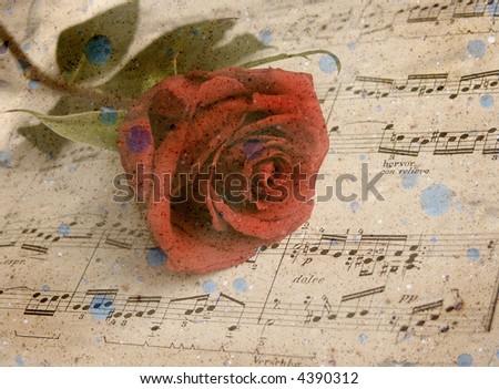 Grunge aged textured rose - stock photo
