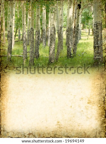 Grunge background of aspen trees with room for text. - stock photo