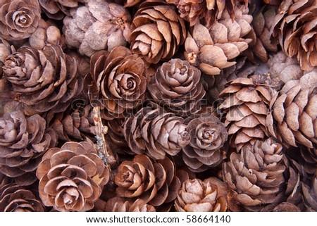 Grunge background of pine cones - stock photo