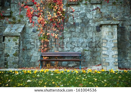 grunge bench with wild grape leaves