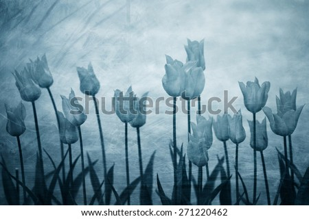 Grunge blurred blue color tone tulip flowers springtime background. Blue grunge effect illustrates the loneliness and sadness. - stock photo