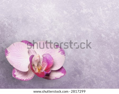 Grunge floral background - magnolia - stock photo