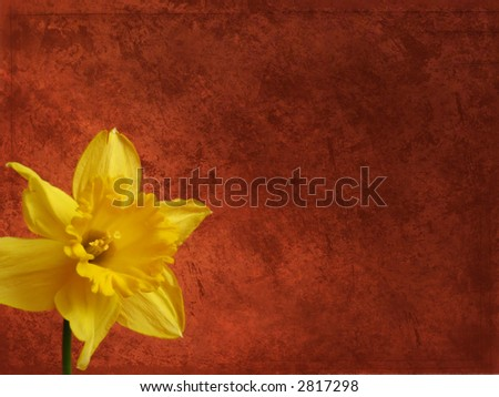 Grunge floral background - yellow daffodil - stock photo