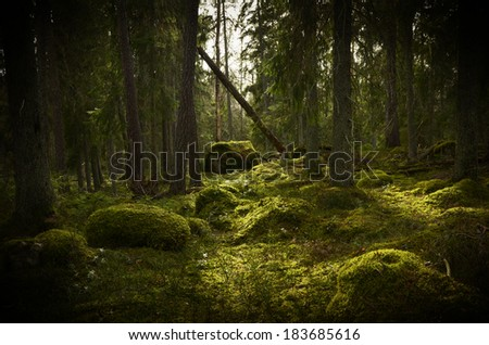 Grunge forest background in Sweden. Textured conceptual image - stock photo