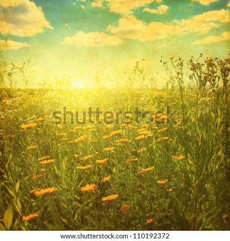 Grunge image of daisy field at sunset. - stock photo