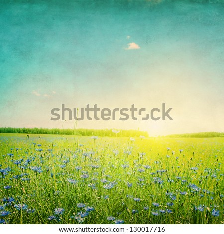 Grunge image of sunset over agricultural field with blue cornflowers. - stock photo