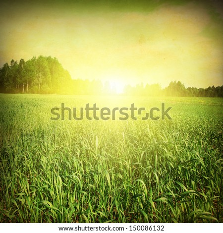 Grunge image of sunset summer landscape. - stock photo