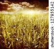 Grunge image of wheat field at sunset. - stock photo