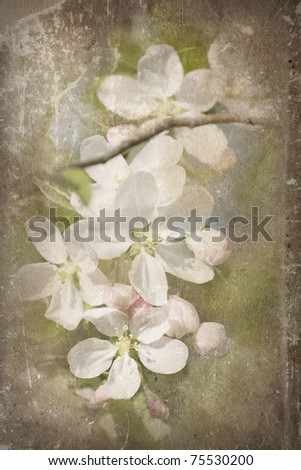 grunge paper with apple blossom - stock photo