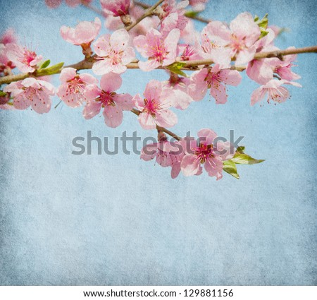grunge paper with peach blossom - stock photo