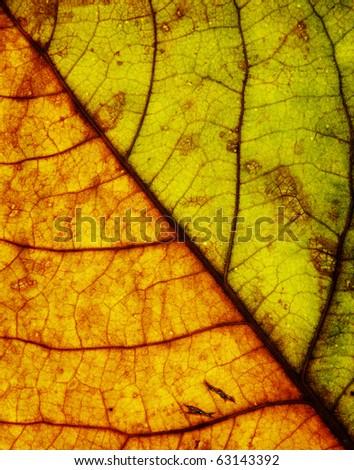 grunge plant texture - stock photo