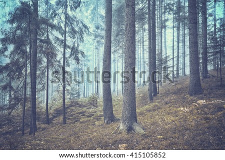 Grunge textured dreamy and foggy conifer forest landscape. Color filter and grunge effect used. - stock photo