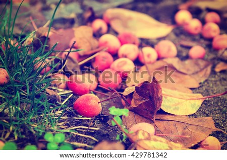 Grunge textured natural seasonal autumn background with small fallen red apples and leaves - stock photo