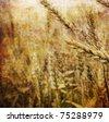 Grunge Wheat Background - stock photo