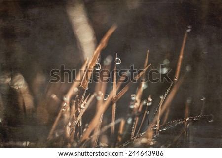 grungy background grass with dew drops paper texture Macro - stock photo