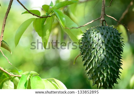 Guanabana or soursop.