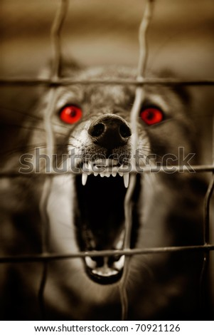 Guard dog - stock photo