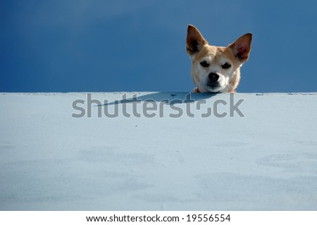 Guard dog is looking down from roof. - stock photo