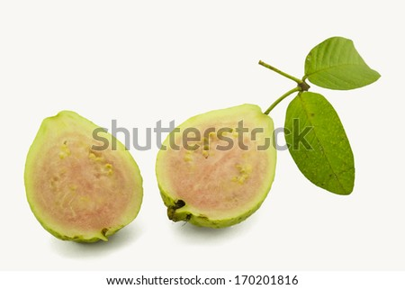 Guava ripe fruit yellow sweet with small hard seeds inside , Scientific name : Psidium guajava L.