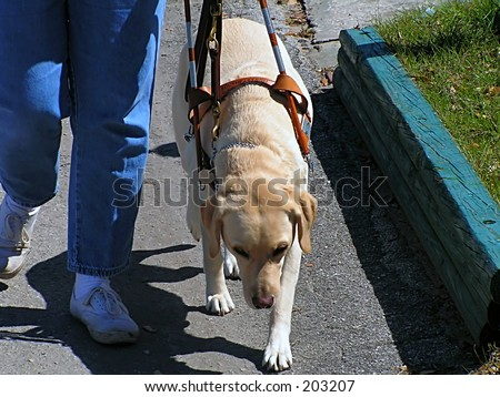 Guide Dog Walking - stock photo