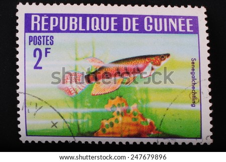 Guinea-circa1964: Postage stamp printed in Republic of Guinea shows the image with the inhabitants of the underwater world of aquarian Senegal fish on green algae background  theme philately animals - stock photo