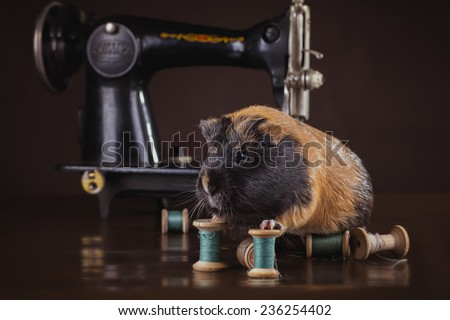 guinea pig retro interior, on brown background - stock photo