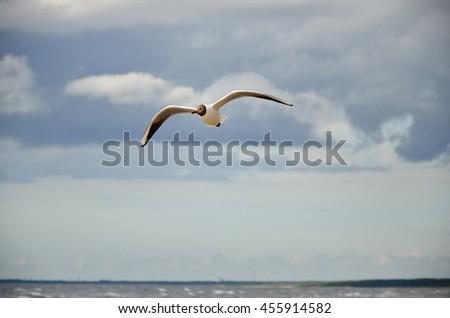 gull  - stock photo