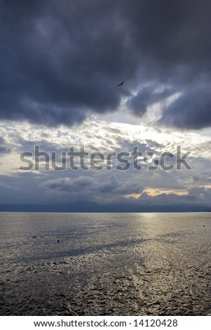 Gull flying over dark Adriatic sea - stock photo