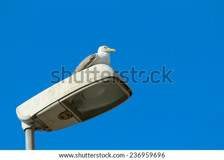 Gull posing on a lamppost in a sunny day